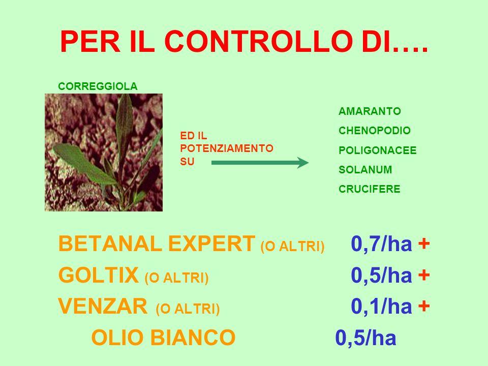 PER IL CONTROLLO DI…. BETANAL EXPERT (O ALTRI) 0,7/ha + GOLTIX (O ALTRI) 0,5/ha + VENZAR (O ALTRI) 0,1/ha + OLIO BIANCO0,5/ha CORREGGIOLA AMARANTO CHE