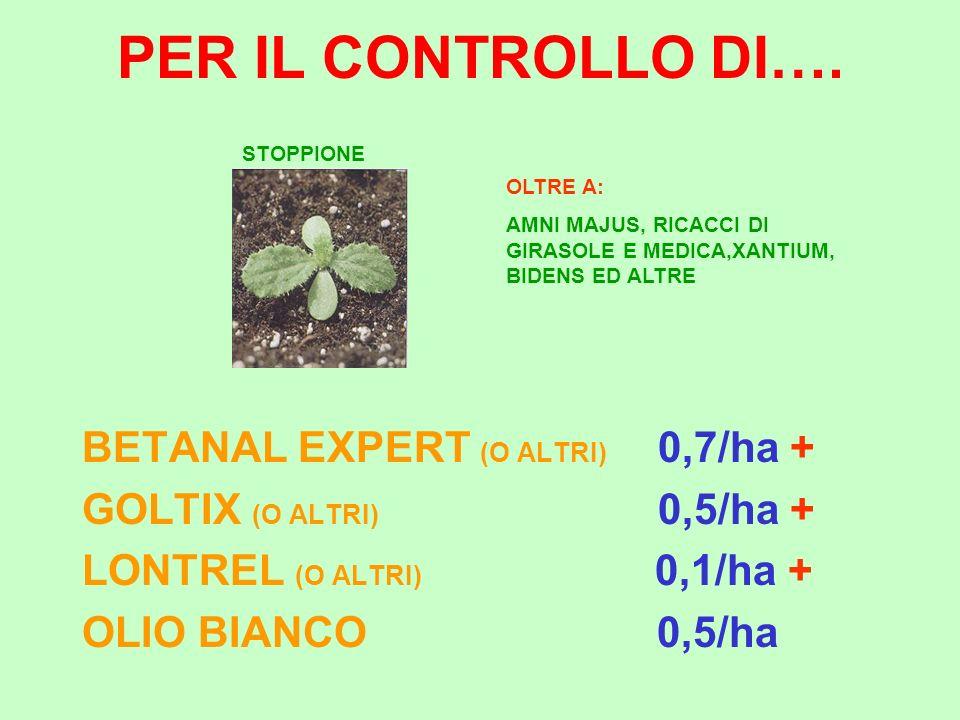 PER IL CONTROLLO DI…. BETANAL EXPERT (O ALTRI) 0,7/ha + GOLTIX (O ALTRI) 0,5/ha + LONTREL (O ALTRI) 0,1/ha + OLIO BIANCO 0,5/ha STOPPIONE OLTRE A: AMN