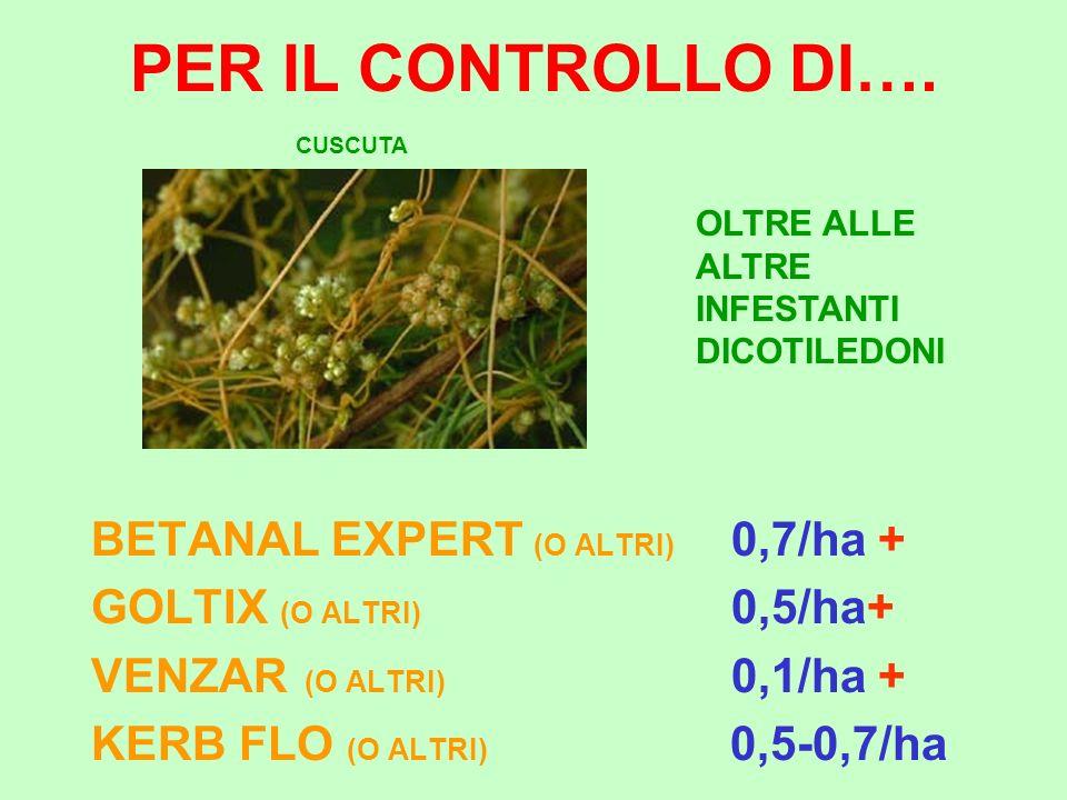 PER IL CONTROLLO DI…. BETANAL EXPERT (O ALTRI) 0,7/ha + GOLTIX (O ALTRI) 0,5/ha+ VENZAR (O ALTRI) 0,1/ha + KERB FLO (O ALTRI) 0,5-0,7/ha CUSCUTA OLTRE