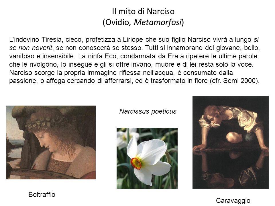 Il mito di Narciso (Ovidio, Metamorfosi) Boltraffio Caravaggio Lindovino Tiresia, cieco, profetizza a Liriope che suo figlio Narciso vivrà a lungo si