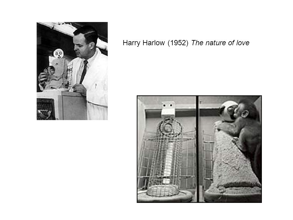 Harry Harlow (1952) The nature of love
