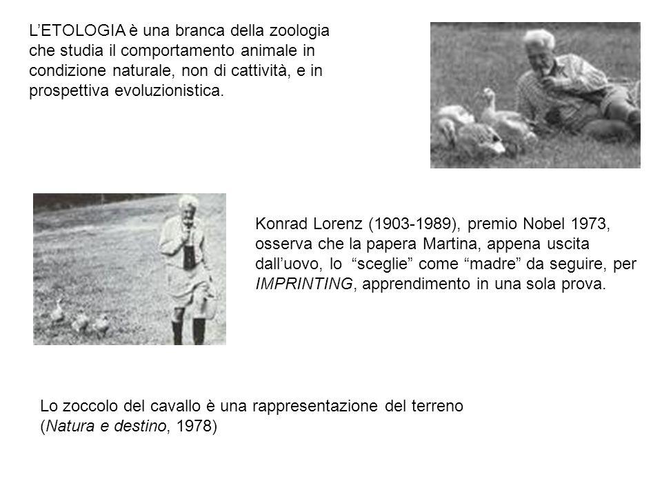 Lo zoccolo del cavallo è una rappresentazione del terreno (Natura e destino, 1978) Konrad Lorenz (1903-1989), premio Nobel 1973, osserva che la papera