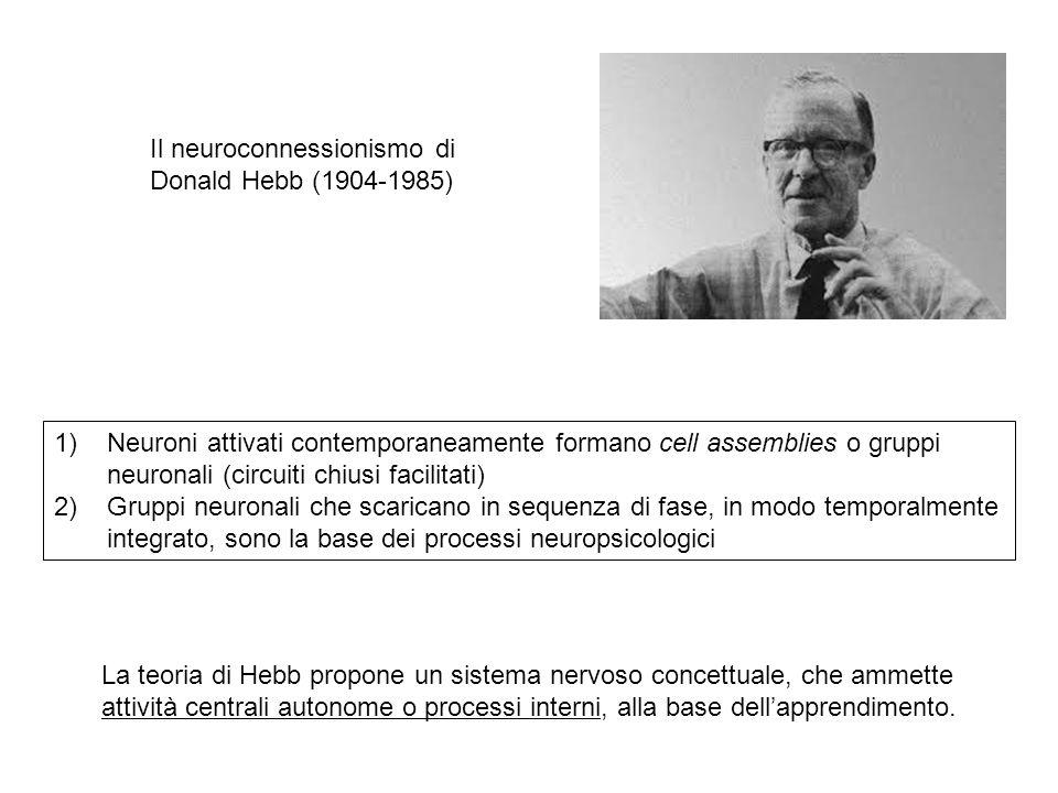 Il neuroconnessionismo di Donald Hebb (1904-1985) 1)Neuroni attivati contemporaneamente formano cell assemblies o gruppi neuronali (circuiti chiusi fa