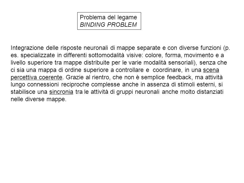 Problema del legame BINDING PROBLEM Integrazione delle risposte neuronali di mappe separate e con diverse funzioni (p. es. specializzate in differenti