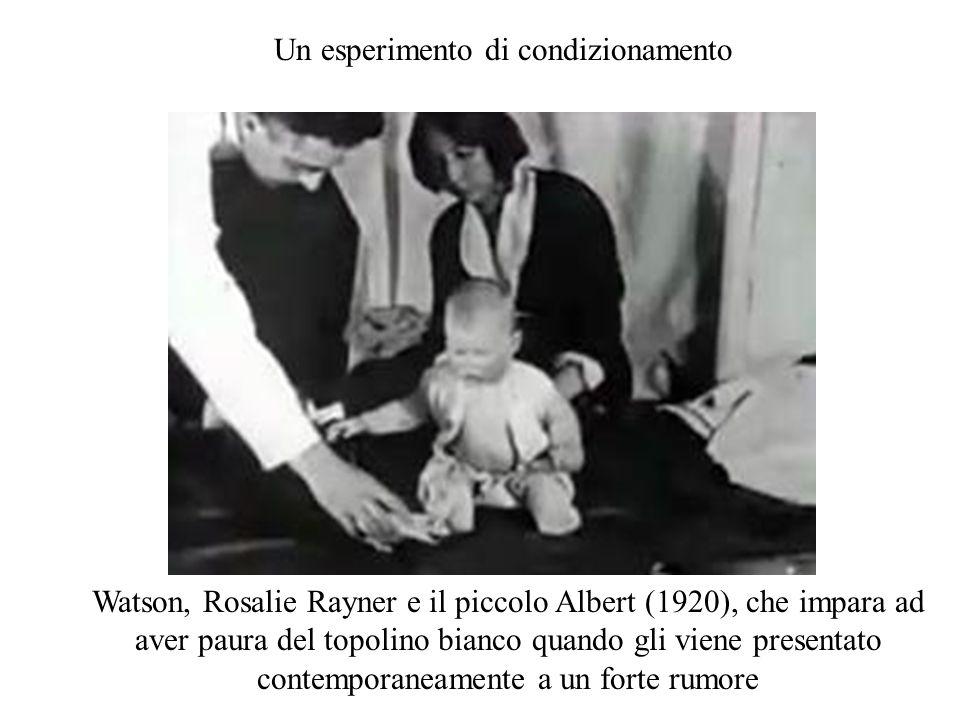 Watson, Rosalie Rayner e il piccolo Albert (1920), che impara ad aver paura del topolino bianco quando gli viene presentato contemporaneamente a un fo