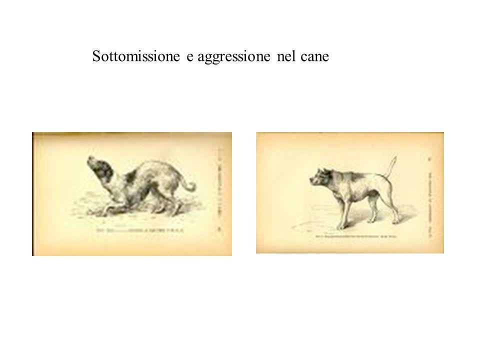 Sottomissione e aggressione nel cane