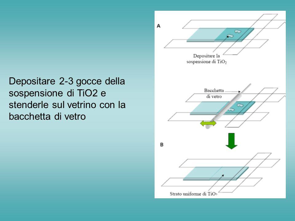 Depositare 2-3 gocce della sospensione di TiO2 e stenderle sul vetrino con la bacchetta di vetro