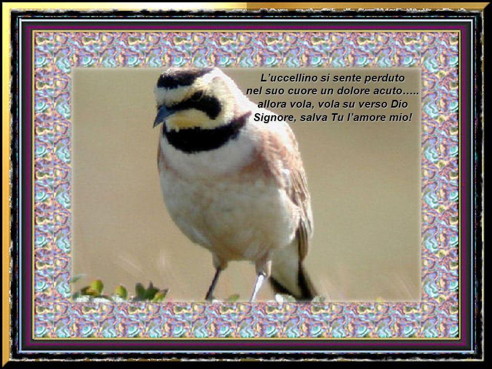 D ue uccellini volano tra i rami cinguettando progettano il domani, ma uno sparo arresta il futuro che ormai non è più sicuro, lei, è la tra i rami fe