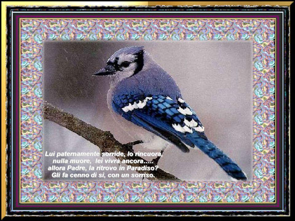L uccellino si sente perduto nel suo cuore un dolore acuto….. allora vola, vola su verso Dio Signore, salva Tu lamore mio!