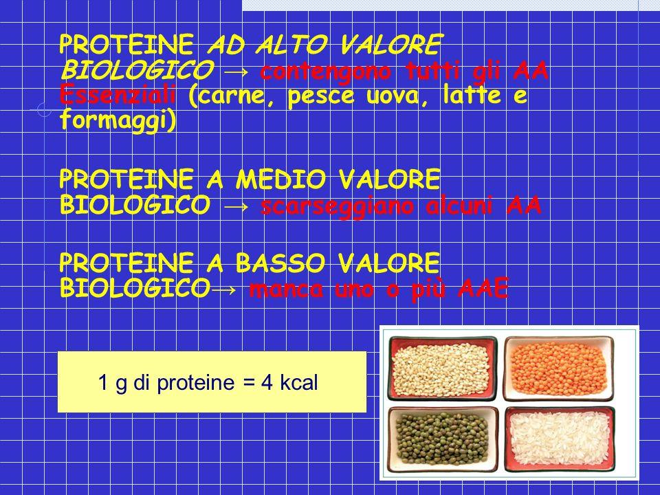 PROTEINE AD ALTO VALORE BIOLOGICO contengono tutti gli AA Essenziali (carne, pesce uova, latte e formaggi) PROTEINE A MEDIO VALORE BIOLOGICO scarseggi