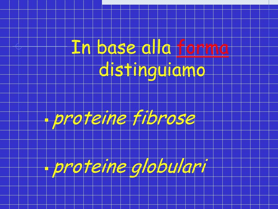 In base alla forma distinguiamo proteine fibrose proteine globulari