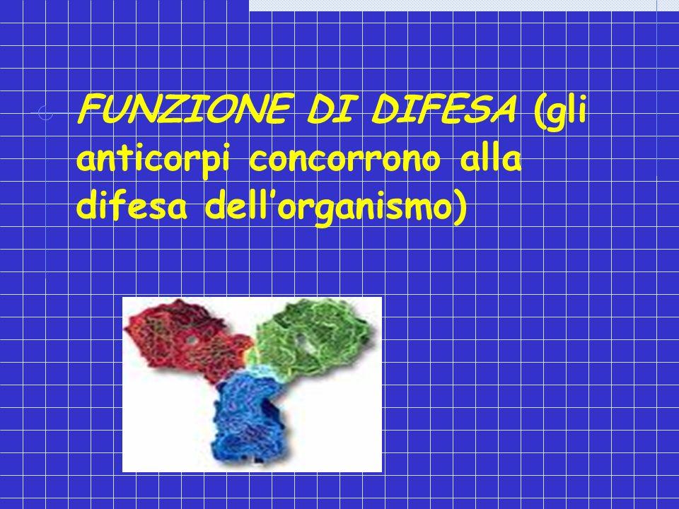 FUNZIONE DI DIFESA (gli anticorpi concorrono alla difesa dellorganismo)