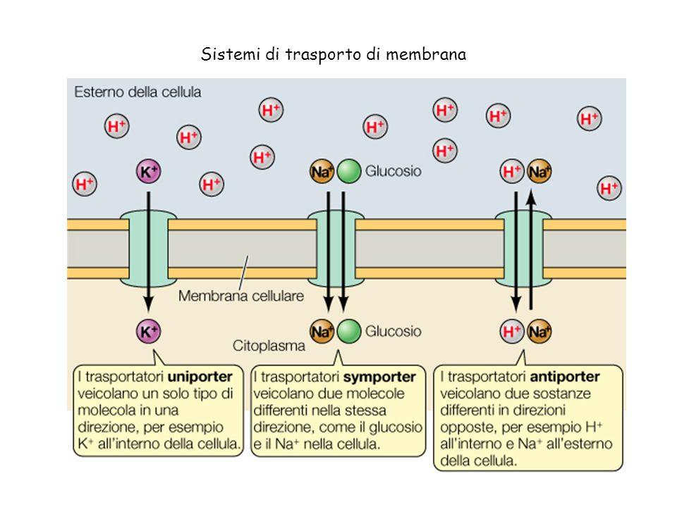 Sistemi di trasporto di membrana
