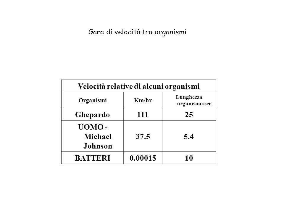 Velocità relative di alcuni organismi OrganismiKm/hr Lunghezza organismo/sec Ghepardo11125 UOMO - Michael Johnson 37.55.4 BATTERI0.0001510 Gara di vel