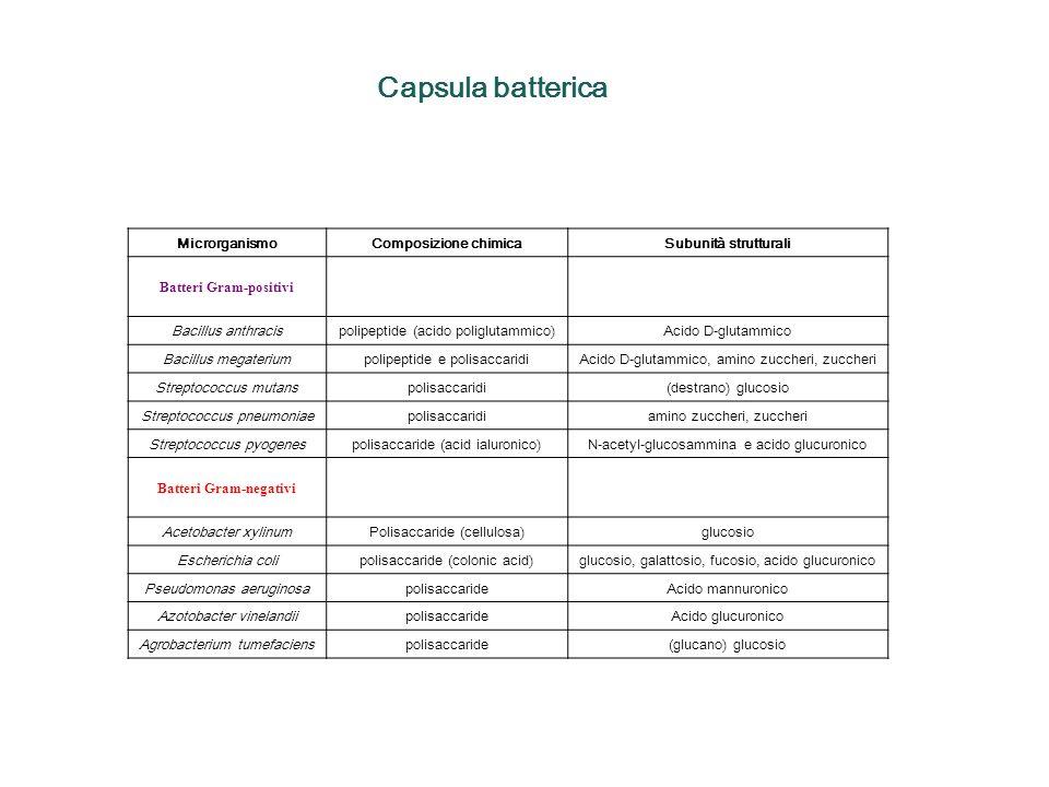 Capsula batterica MicrorganismoComposizione chimicaSubunità strutturali Batteri Gram-positivi Bacillus anthracispolipeptide (acido poliglutammico)Acid