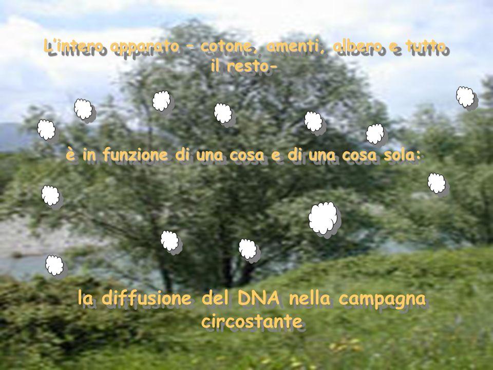 Lintero apparato – cotone, amenti, albero e tutto il resto- è in funzione di una cosa e di una cosa sola: la diffusione del DNA nella campagna circost