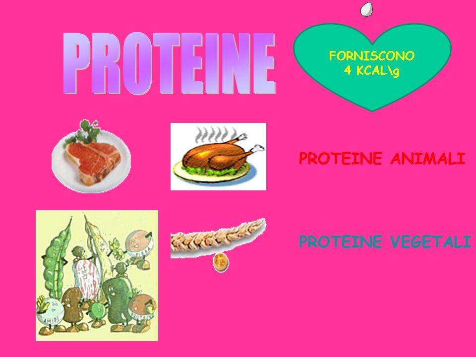 PROTEINE ANIMALI PROTEINE VEGETALI FORNISCONO 4 KCAL\g