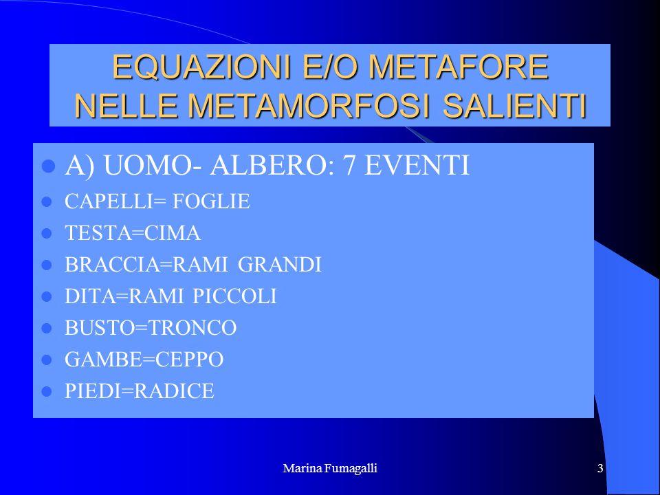 Marina Fumagalli3 EQUAZIONI E/O METAFORE NELLE METAMORFOSI SALIENTI A) UOMO- ALBERO: 7 EVENTI CAPELLI= FOGLIE TESTA=CIMA BRACCIA=RAMI GRANDI DITA=RAMI