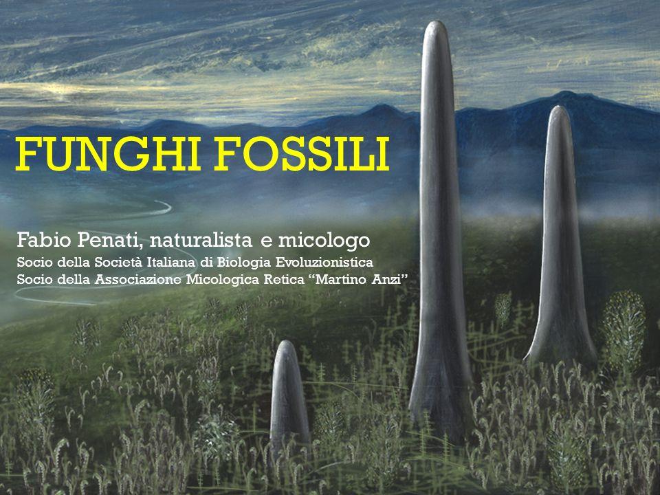 FUNGHI FOSSILI Fabio Penati, naturalista e micologo Socio della Società Italiana di Biologia Evoluzionistica Socio della Associazione Micologica Retic