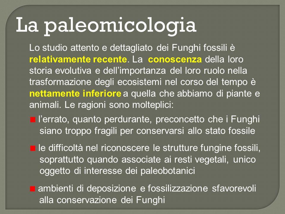 Scala dei tempi geologici Neo- proterozoico Meso- proterozoico Ediacariano Cryogeniano Toniano 545 - 1000 Steniano Ectasiano Calymmiano 1000 - 1600 4540