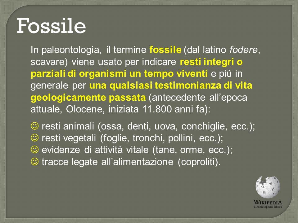 Fossilizzazione Il processo di trasformazione di un organismo vivente in un fossile può durare diversi milioni di anni.