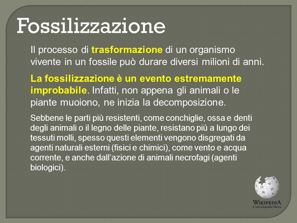 Fossilizzazione Generalmente, per subire un processo completo di fossilizzazione, un organismo deve essere sepolto rapidamente, prima che ne subentri la decomposizione o venga aggredito dagli agenti demolitori.