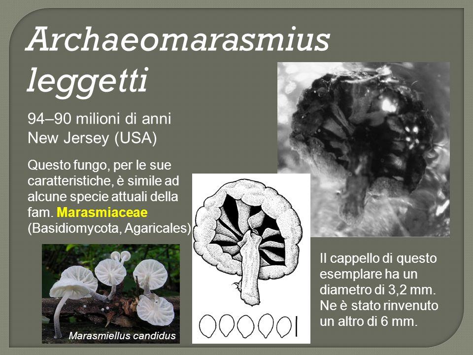 240 Ma.Zygomycota, Glomeromycota e Basidiomycota si rivengono nel Triassico medio dellAntartide.
