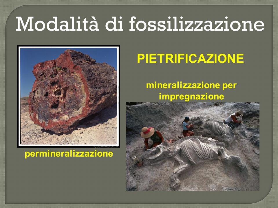 Modalità di fossilizzazione COMPRESSIONE e CARBONIFICAZIONE