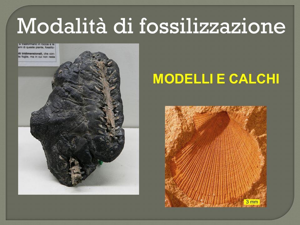 Modalità di fossilizzazione INGLOBAMENTO IN RESINA FOSSILE