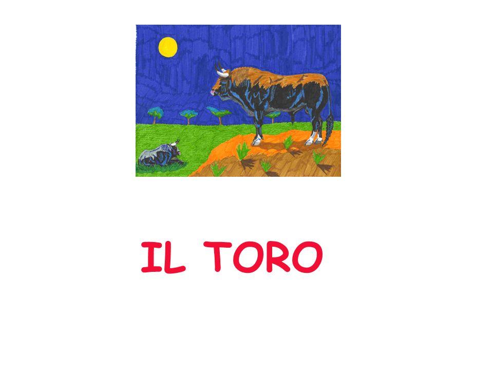 IL TORO