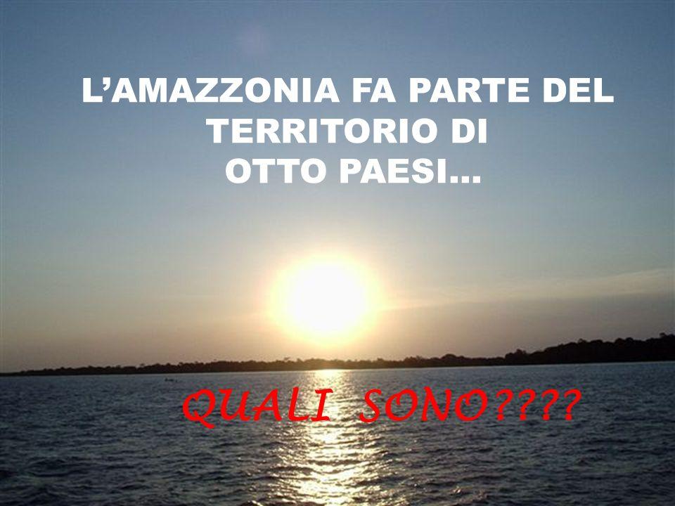 QUALCHE MISTERO DELLA GRANDE FORESTA ! SCOPRIAMO...
