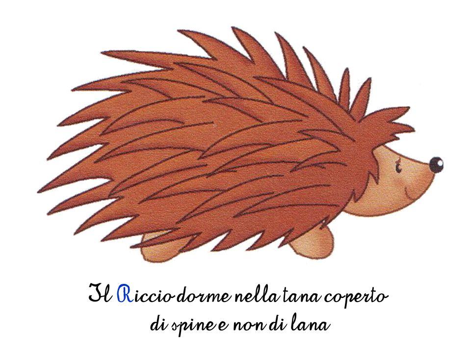 Il Riccio dorme nella tana coperto di spine e non di lana