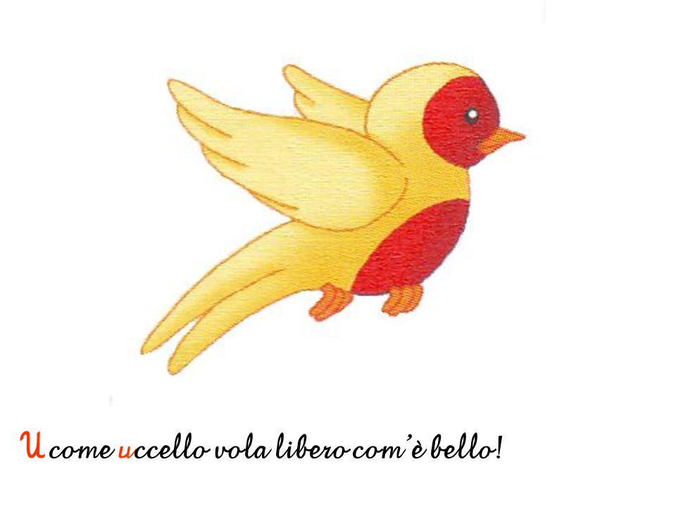 U come uccello vola libero comè bello!