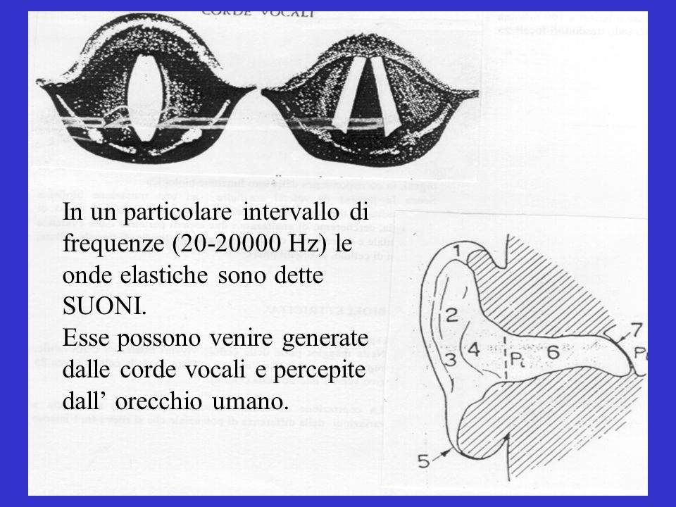 In un particolare intervallo di frequenze (20-20000 Hz) le onde elastiche sono dette SUONI. Esse possono venire generate dalle corde vocali e percepit