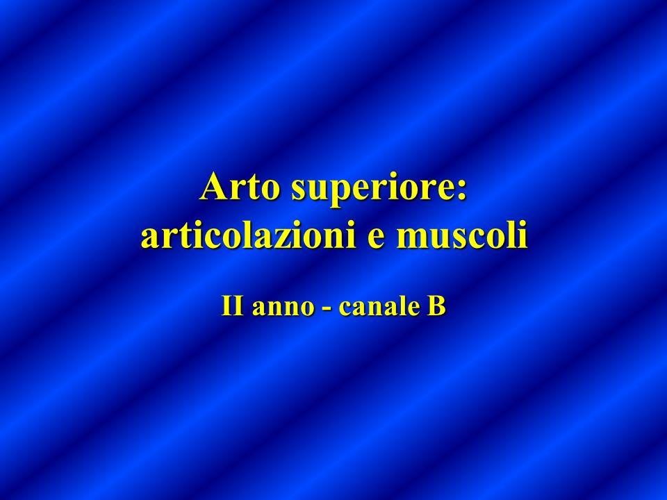 Arto superiore: articolazioni e muscoli II anno - canale B