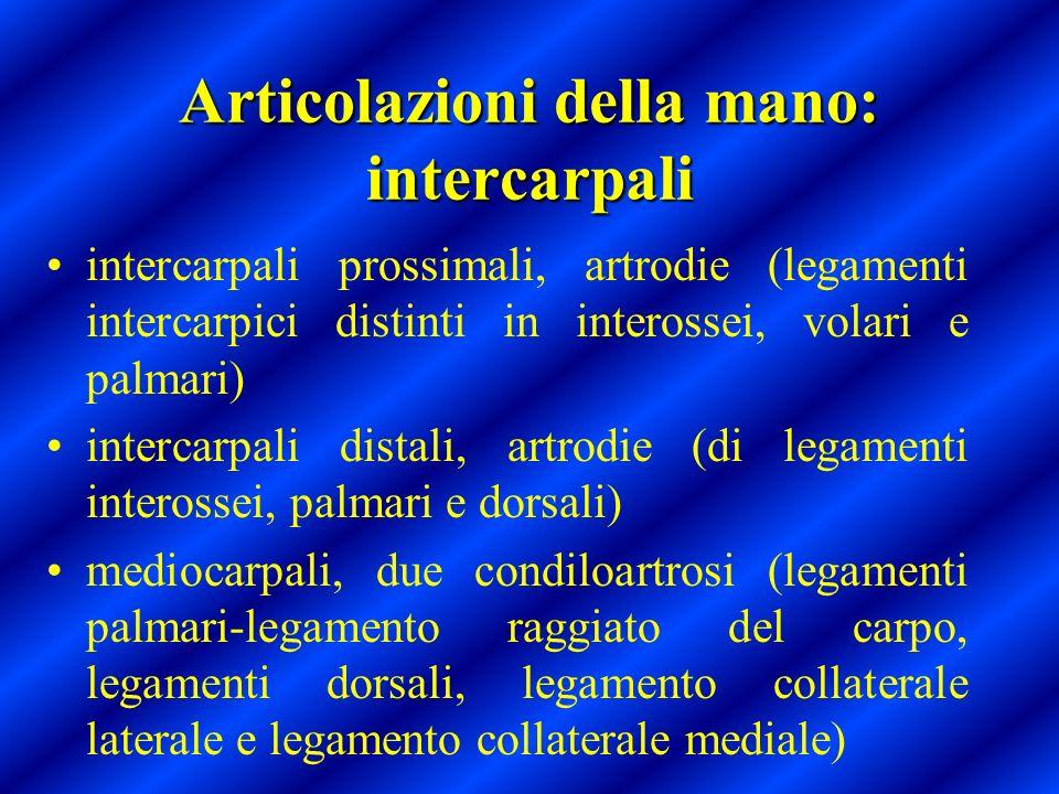 Articolazioni della mano: intercarpali intercarpali prossimali, artrodie (legamenti intercarpici distinti in interossei, volari e palmari) intercarpal