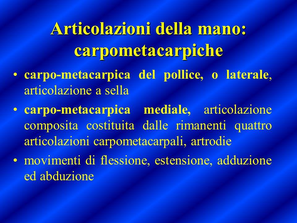 Articolazioni della mano: carpometacarpiche carpo-metacarpica del pollice, o laterale, articolazione a sella carpo-metacarpica mediale, articolazione