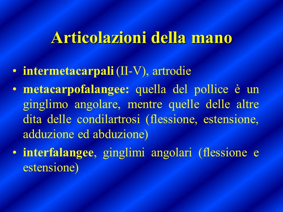 Articolazioni della mano intermetacarpali (II-V), artrodie metacarpofalangee: quella del pollice è un ginglimo angolare, mentre quelle delle altre dit