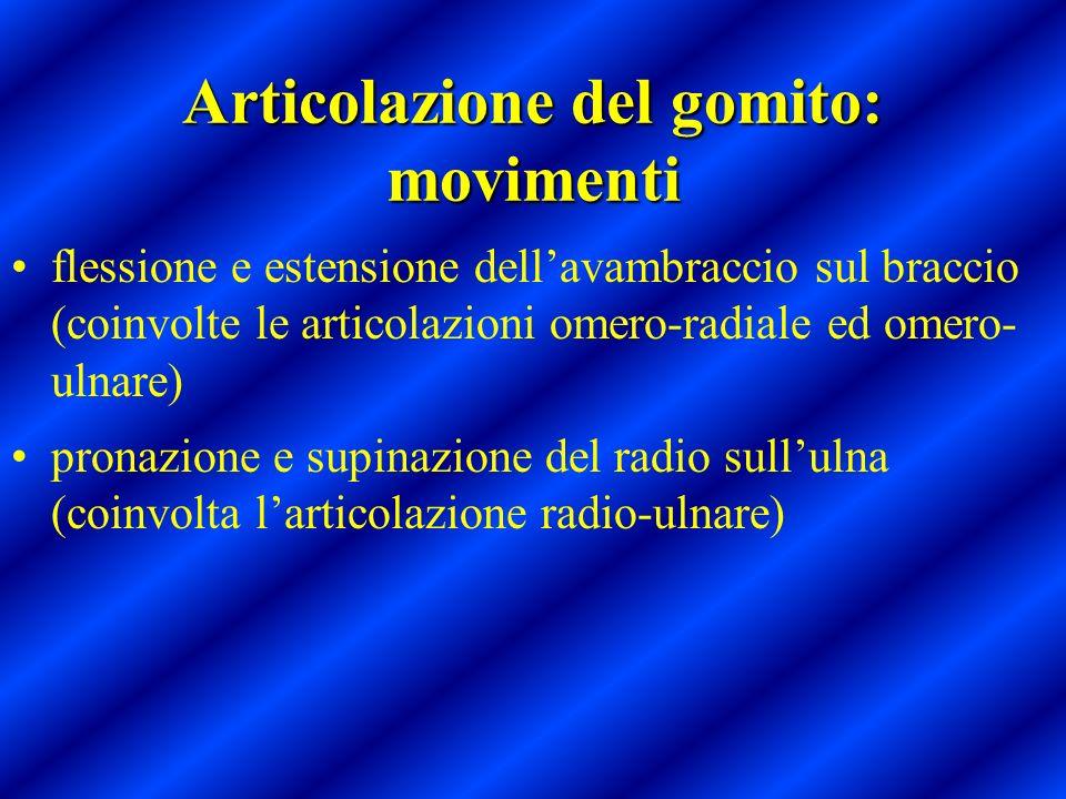 Articolazione del gomito: movimenti flessione e estensione dellavambraccio sul braccio (coinvolte le articolazioni omero-radiale ed omero- ulnare) pro