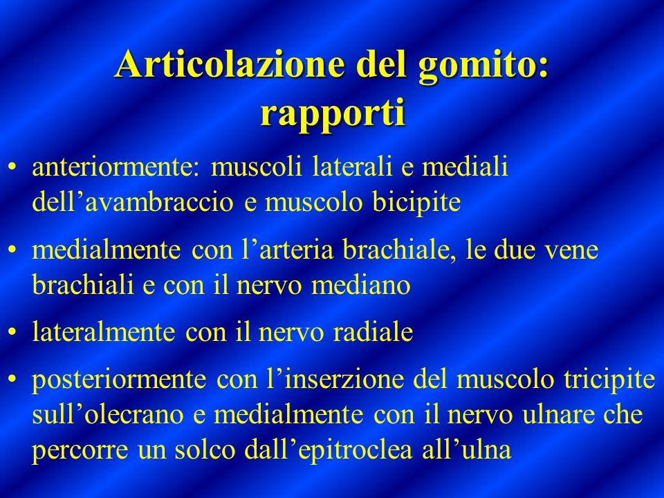 Articolazione del gomito: rapporti anteriormente: muscoli laterali e mediali dellavambraccio e muscolo bicipite medialmente con larteria brachiale, le