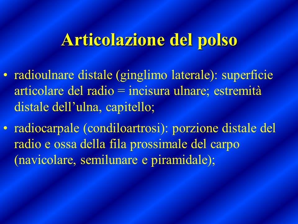 Articolazione del polso radioulnare distale (ginglimo laterale): superficie articolare del radio = incisura ulnare; estremità distale dellulna, capite
