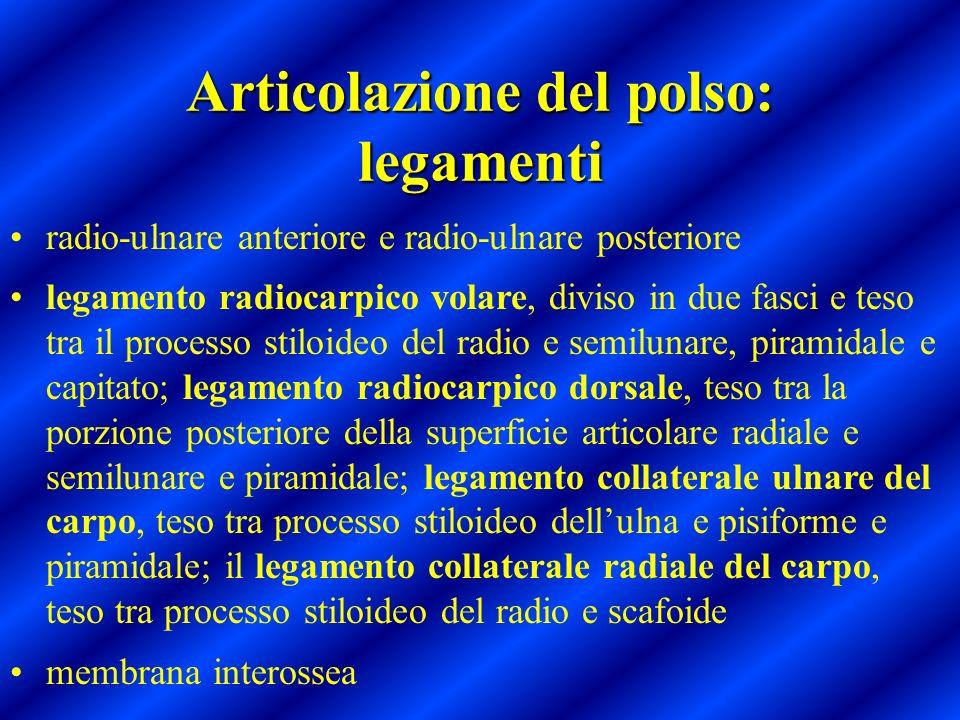 Articolazione del polso: legamenti radio-ulnare anteriore e radio-ulnare posteriore legamento radiocarpico volare, diviso in due fasci e teso tra il p