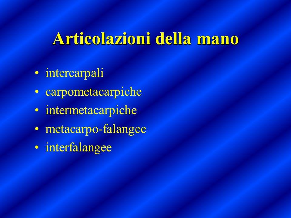 Articolazioni della mano intercarpali carpometacarpiche intermetacarpiche metacarpo-falangee interfalangee
