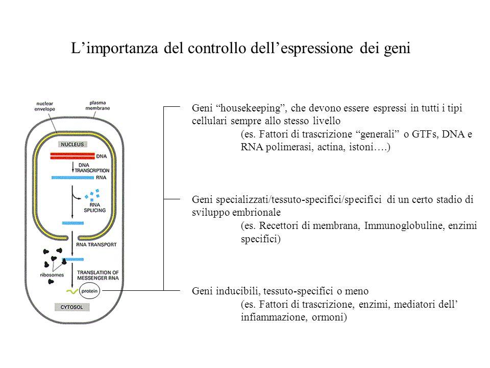 Limportanza del controllo dellespressione dei geni Geni housekeeping, che devono essere espressi in tutti i tipi cellulari sempre allo stesso livello