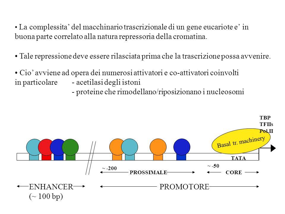 La complessita del macchinario trascrizionale di un gene eucariote e in buona parte correlato alla natura repressoria della cromatina. TATA Basal tr.