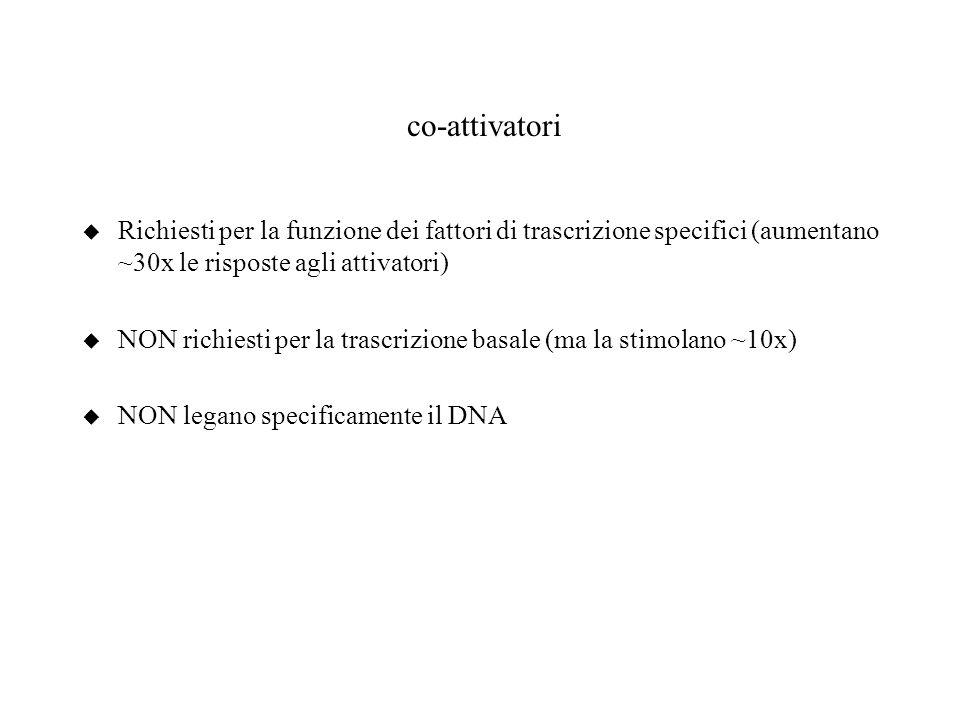 co-attivatori u Richiesti per la funzione dei fattori di trascrizione specifici (aumentano ~30x le risposte agli attivatori) u NON richiesti per la tr