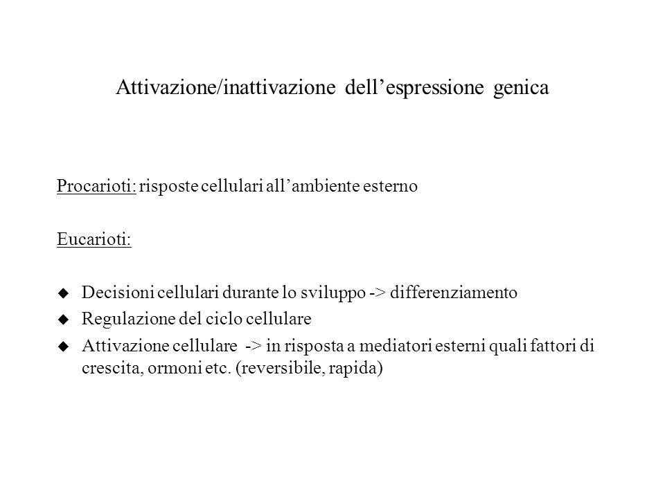 Attivazione/inattivazione dellespressione genica Procarioti: risposte cellulari allambiente esterno Eucarioti: u Decisioni cellulari durante lo svilup