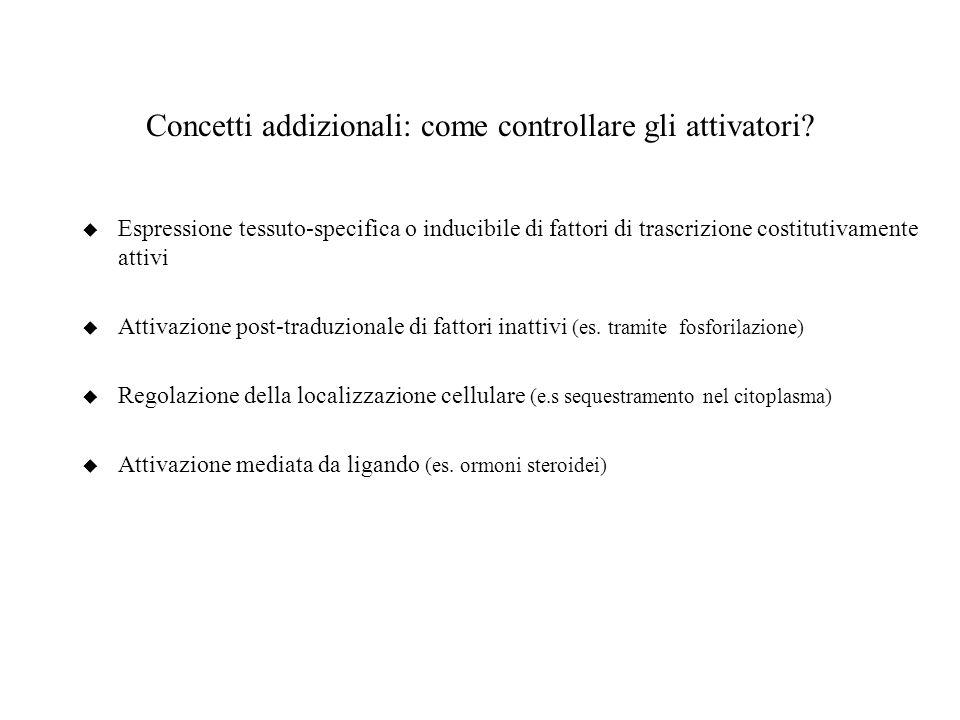 Concetti addizionali: come controllare gli attivatori? u Espressione tessuto-specifica o inducibile di fattori di trascrizione costitutivamente attivi