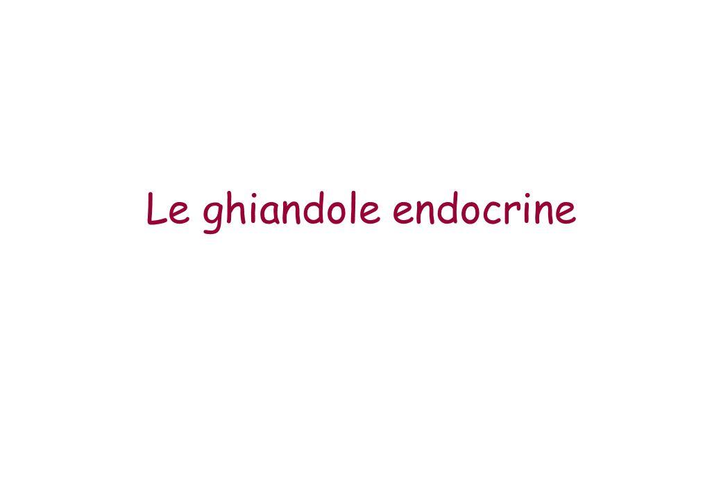 Le ghiandole endocrine