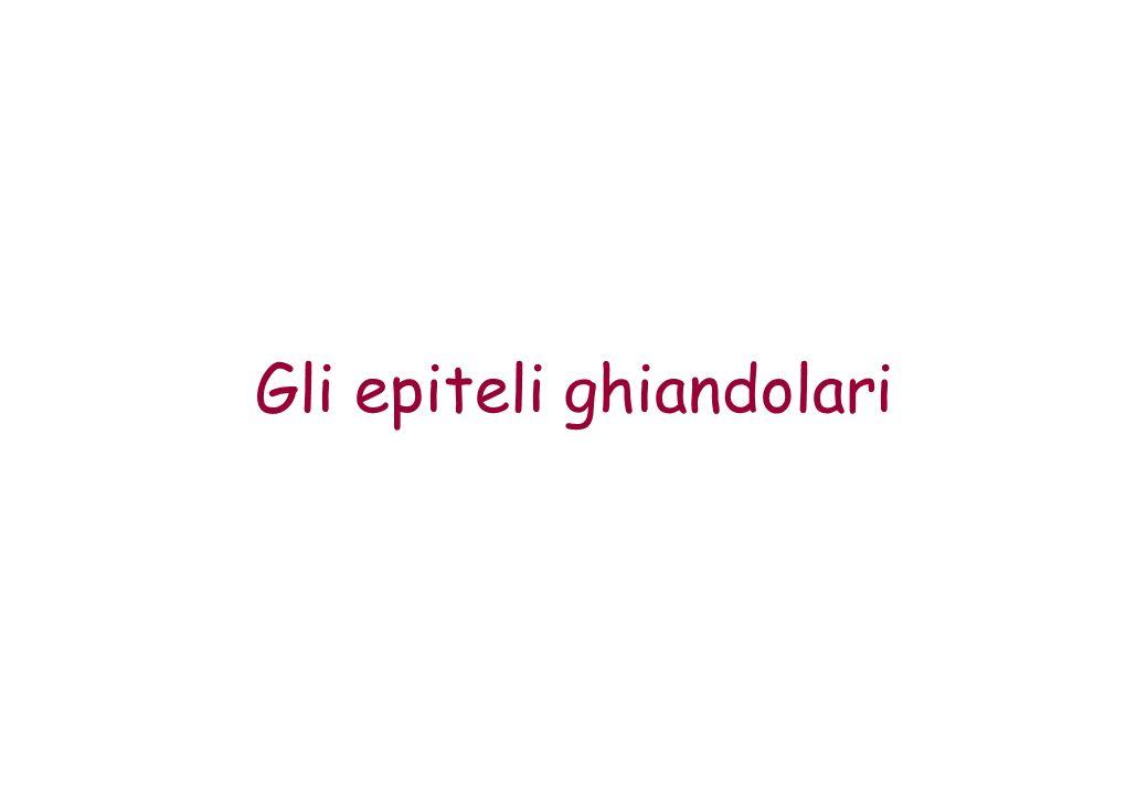 Gli epiteli ghiandolari